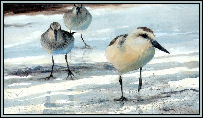 Least Sandpipers&Sanderling. Roger Bansemer