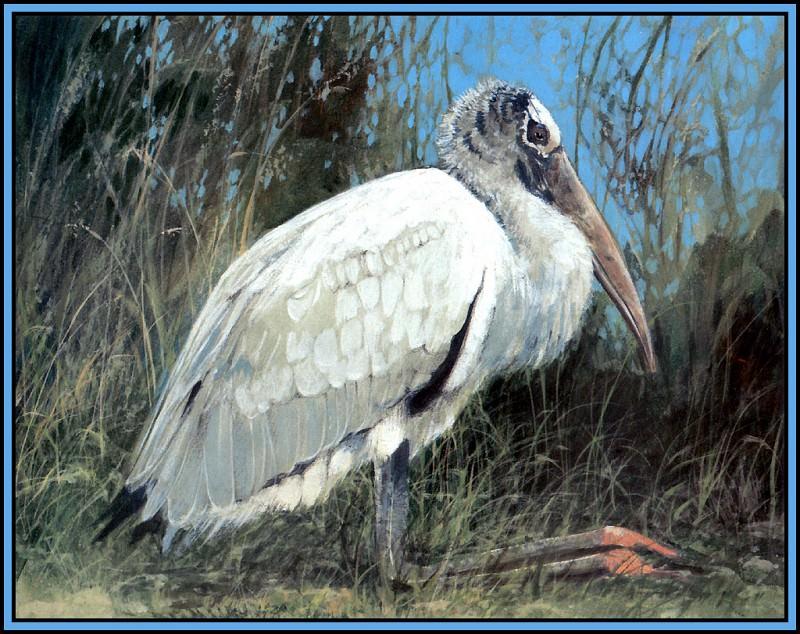 Stork 2 (young). Roger Bansemer