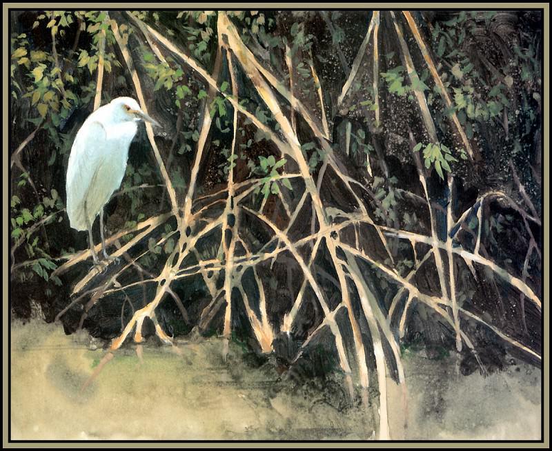 Обитатели мангровых зарослей 1. Роджер Бансмер