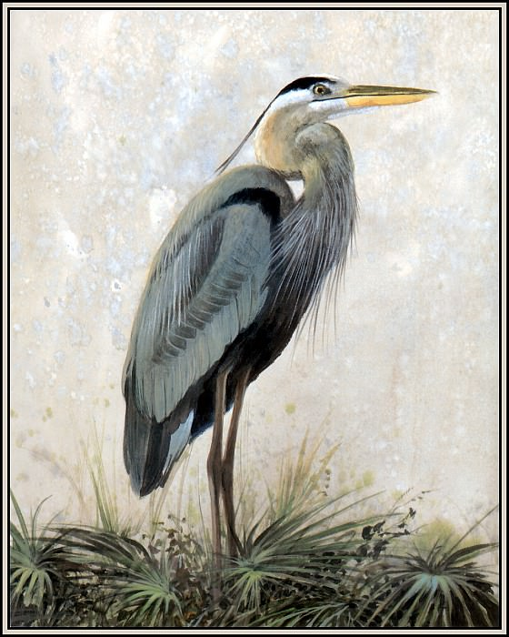 Great Blue Heron 1. Roger Bansemer