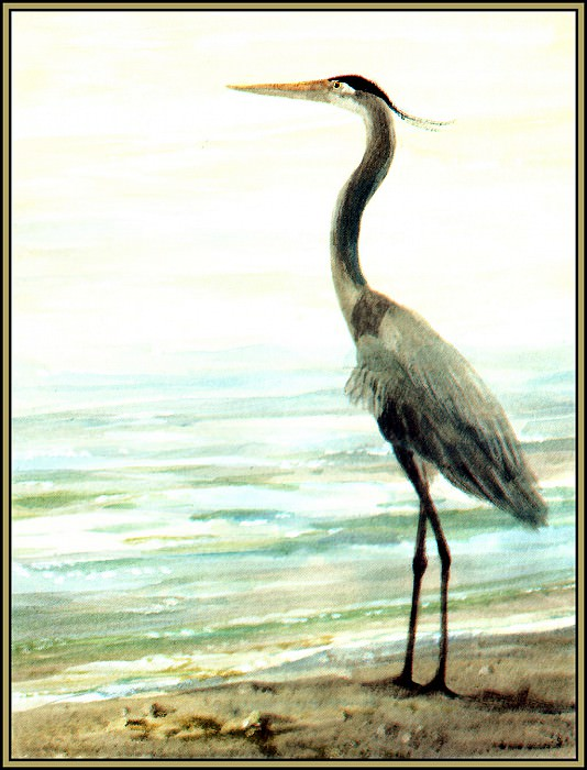 Great Blue Heron 3. Roger Bansemer