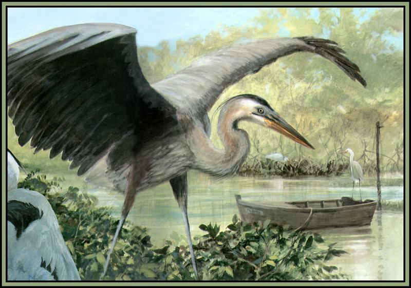 Great Blue Heron 5. Roger Bansemer