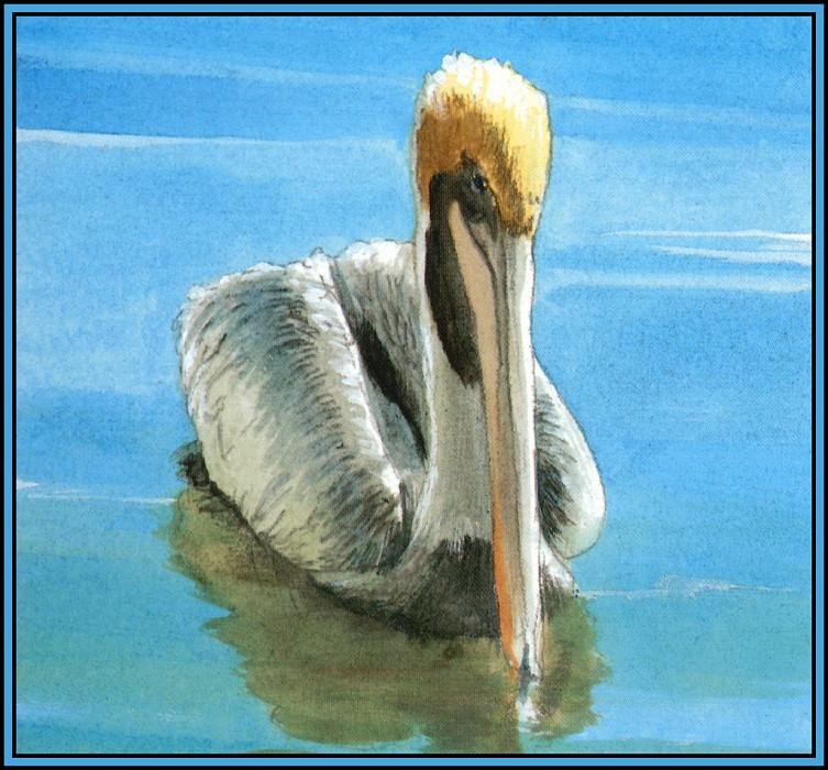Brown Pelican 2. Roger Bansemer