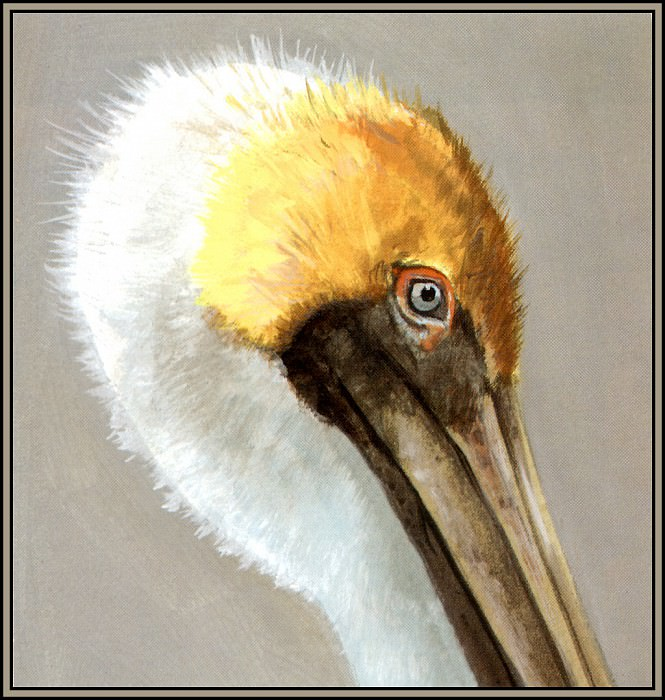 Коричневый пеликан 5. Роджер Бансмер