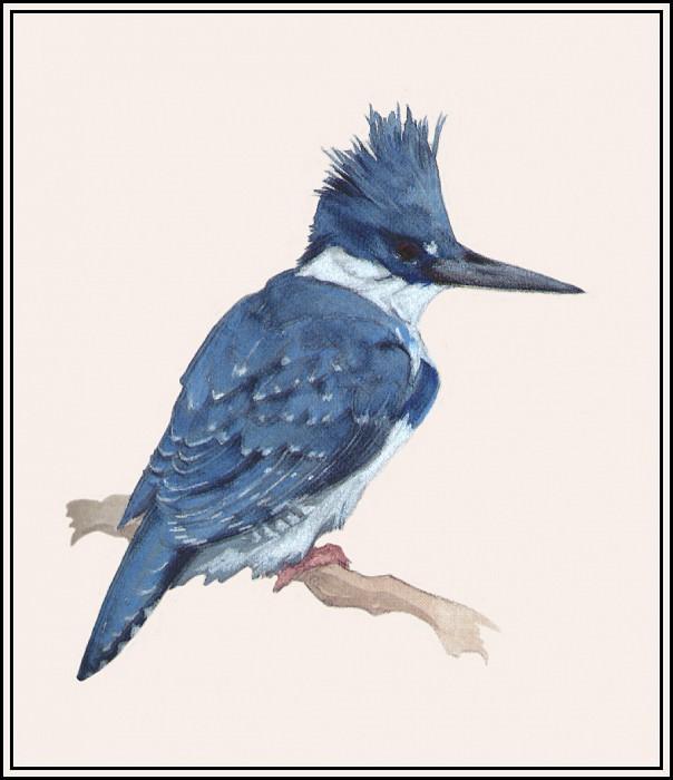 Kingfisher 2. Roger Bansemer