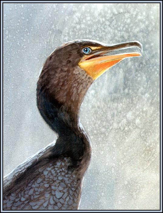 Cormorant 1. Roger Bansemer