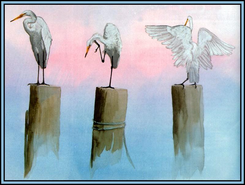 Great Egret 2. Roger Bansemer