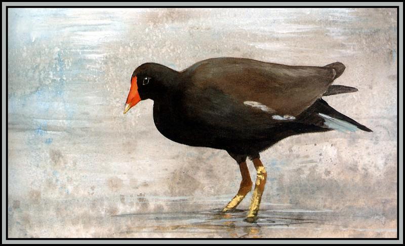 Common Moorhen 1. Roger Bansemer