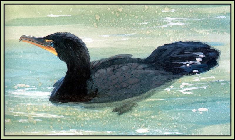 Cormorant 3. Roger Bansemer