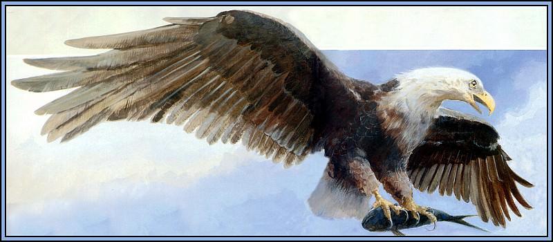 Eagle 1. Roger Bansemer