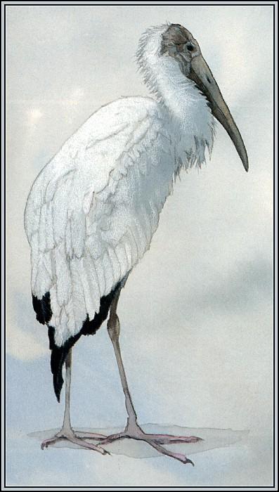 Stork 3. Roger Bansemer