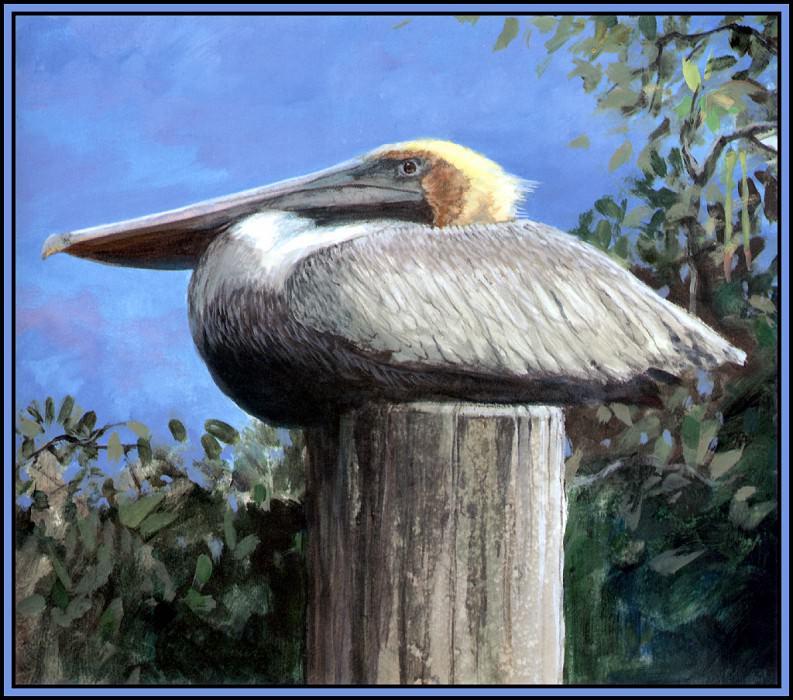 Brown Pelican 3. Roger Bansemer
