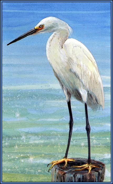 Snowy Egret 2. Roger Bansemer