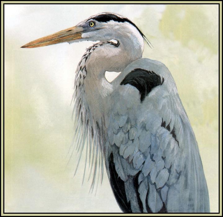 eat Blue Heron 4. Roger Bansemer