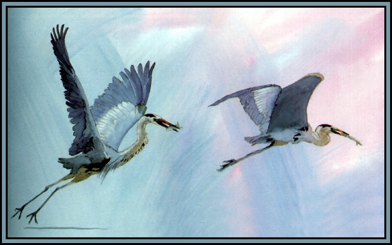 Great Blue Heron 2. Roger Bansemer