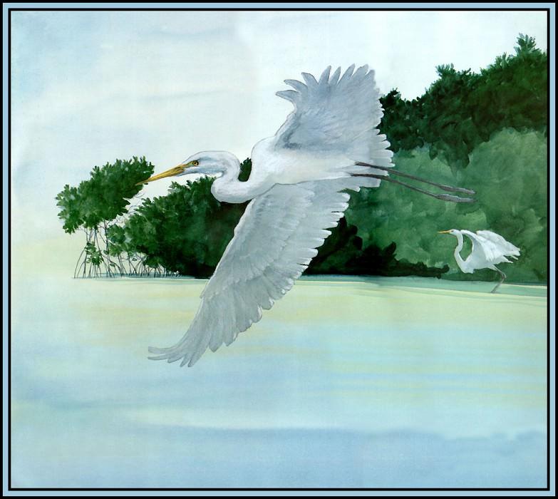 Great Egret 5. Roger Bansemer