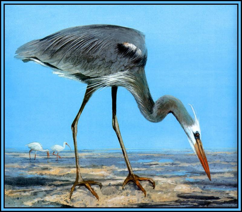 Wurdemanns Heron 1. Roger Bansemer