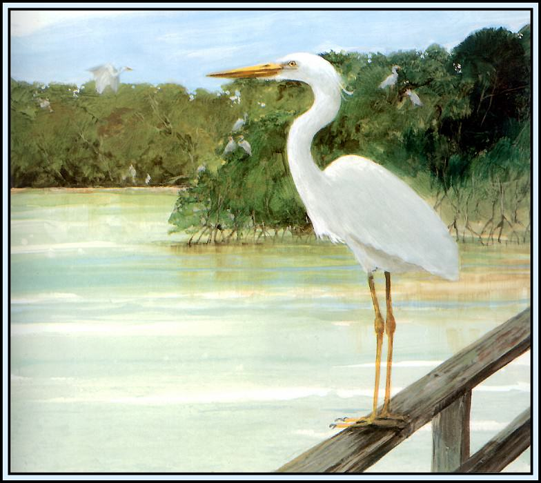 Great White Heron 2. Roger Bansemer
