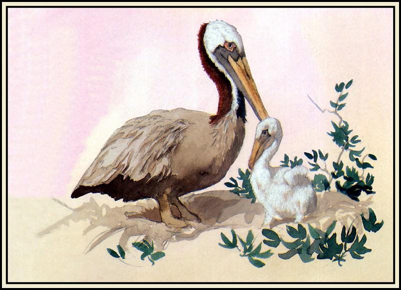 Коричневый пеликан 4. Роджер Бансмер