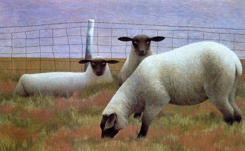Three Sheep. Alex Colville