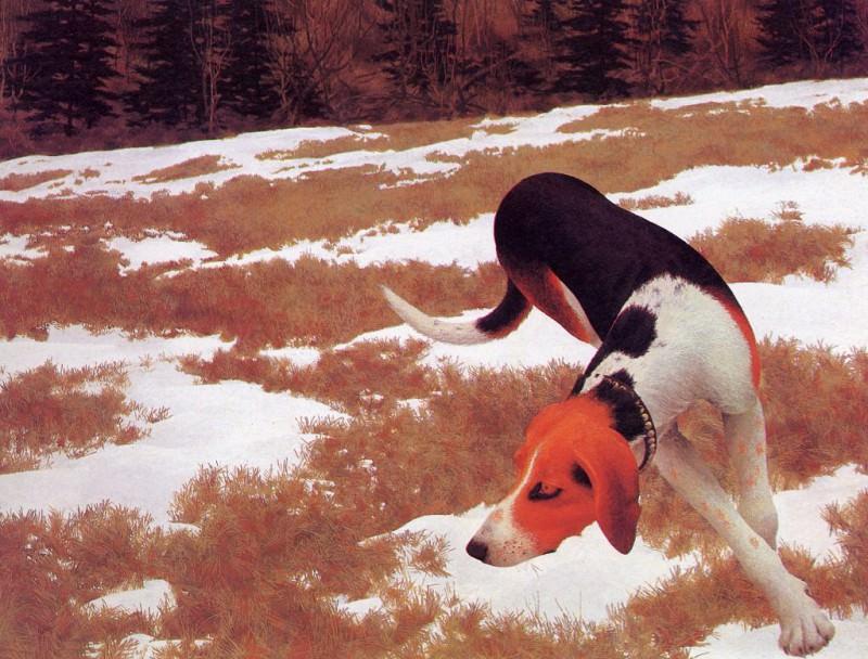 Hound in Field. Alex Colville