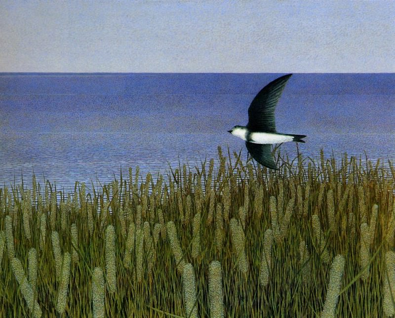 One Swallow. Alex Colville