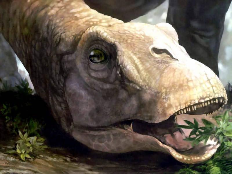 dinosaurs karongasaurus. Karen Carr
