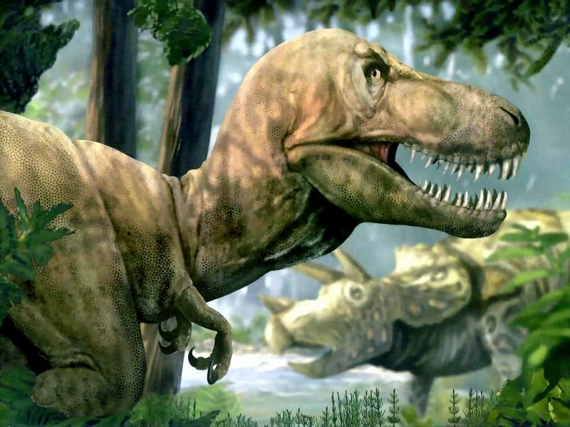 dinosaurs tyrannosaurus rex. Karen Carr