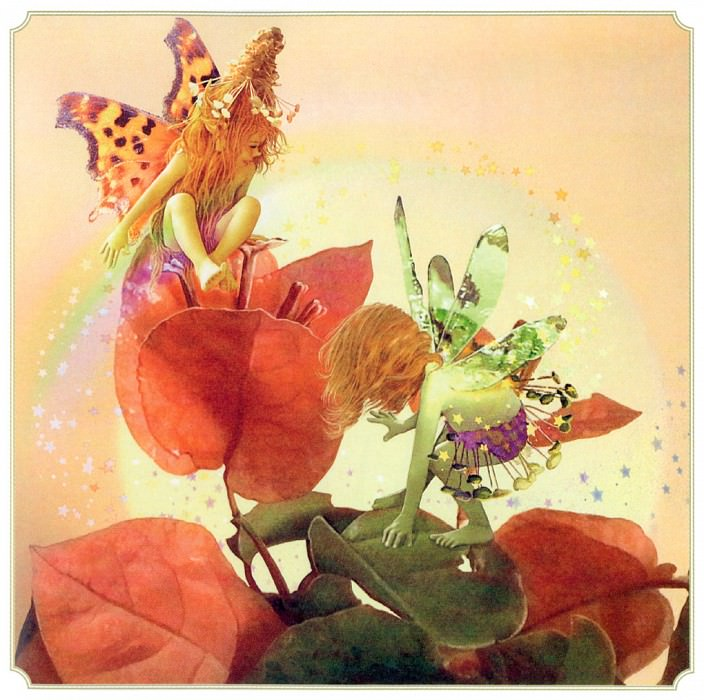 Bougainvillea Fairy. Tom Cross