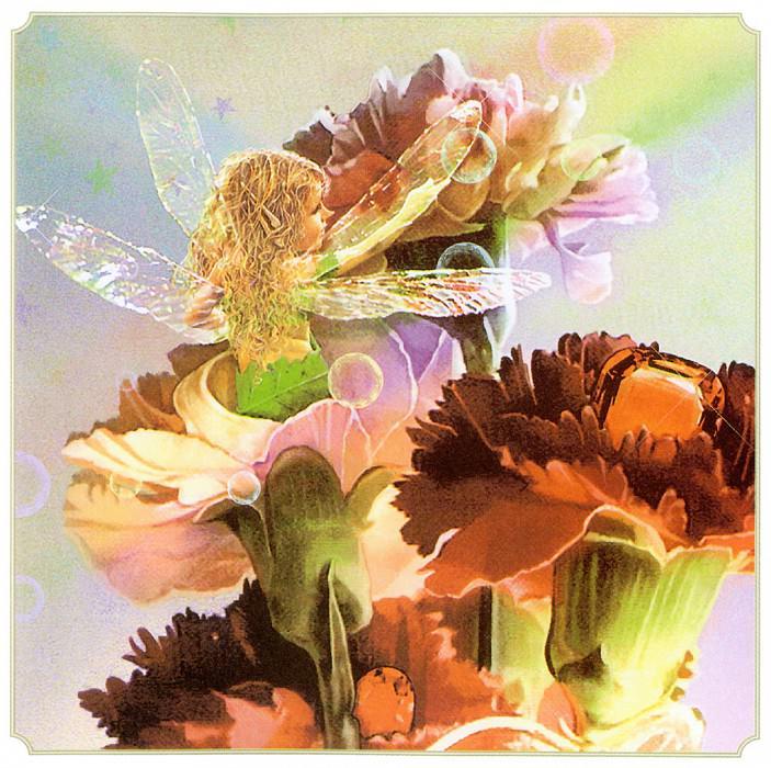 Win Carnation Fairy. Tom Cross
