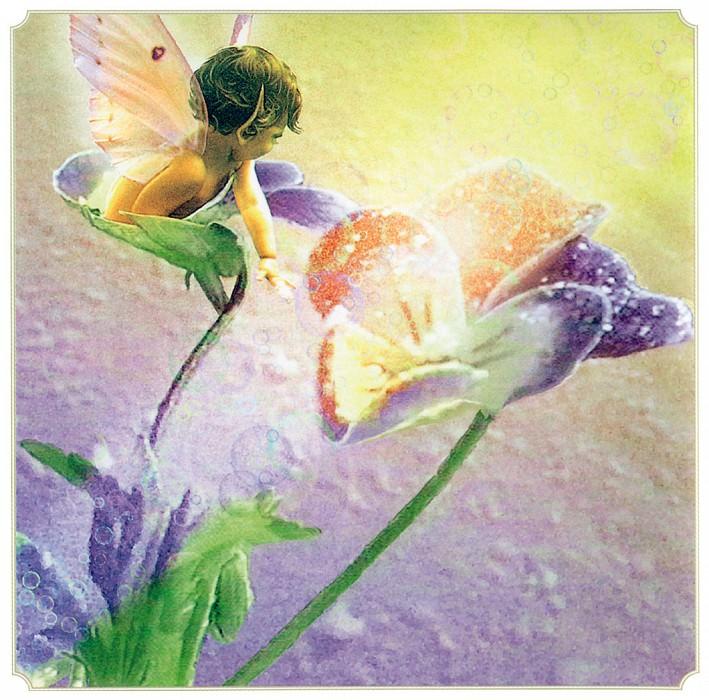 Pansy Fairy. Tom Cross