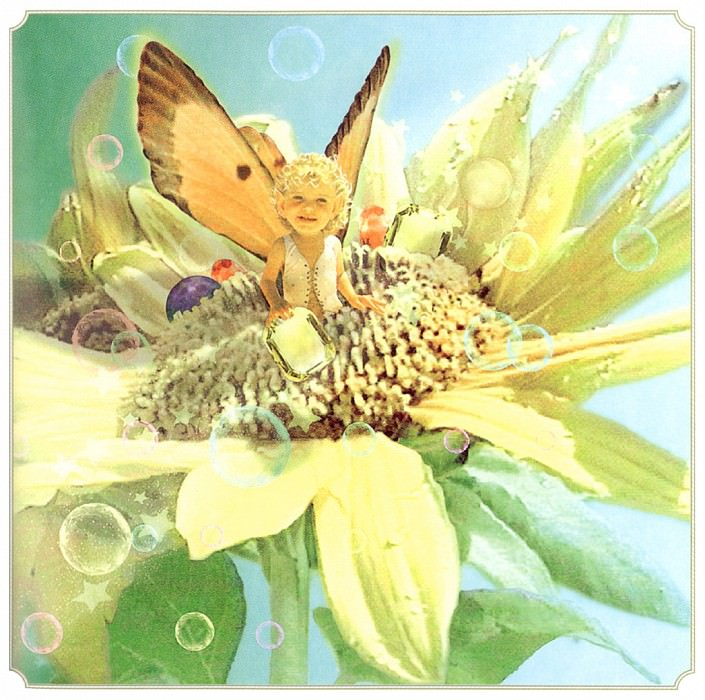 Sum Sunflower Fairy. Tom Cross