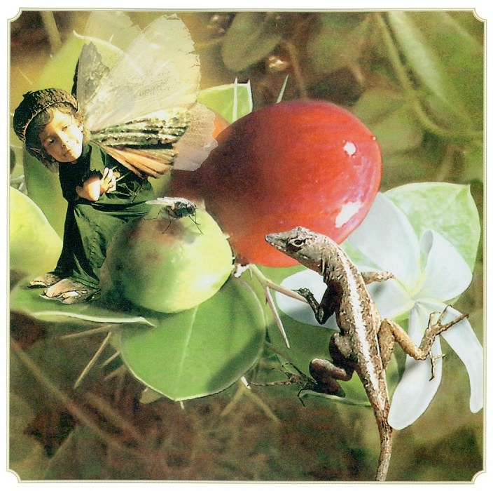 Win Natal Plum Fairy. Tom Cross