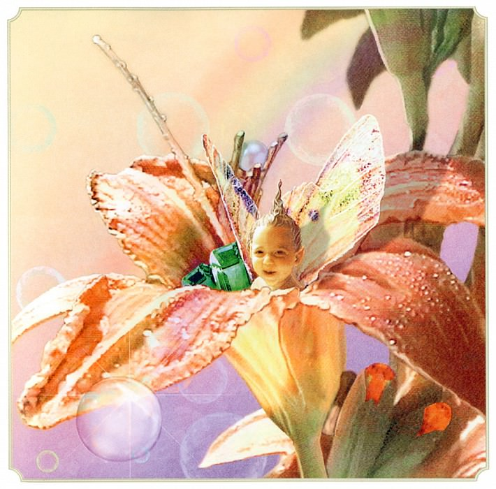 Sum Daylily Fairy. Tom Cross