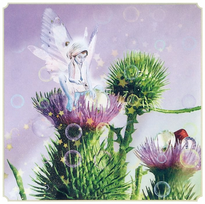 Aut Thistle Fairy. Tom Cross