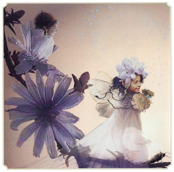 Sum Chicory Fairy. Tom Cross
