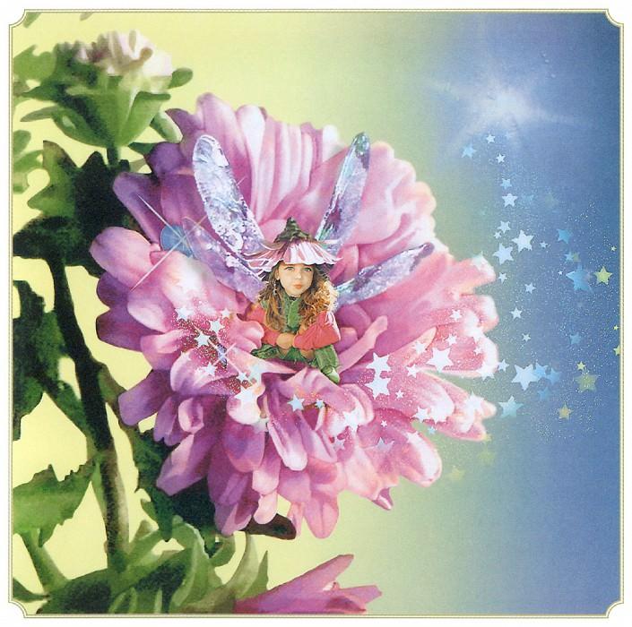 Aut Aster Fairy. Tom Cross