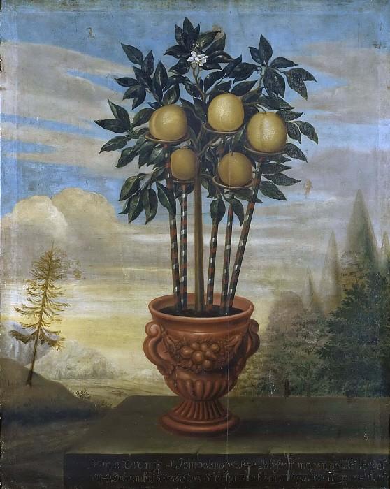 Апельсиновое дерево в горшке. Дэвид фон Кёлн