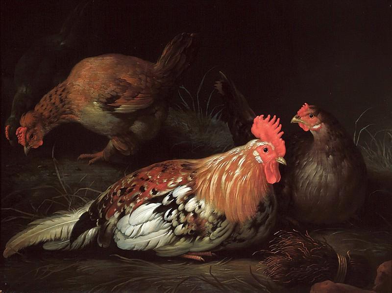 Петух и курицы. Альберт Кёйп