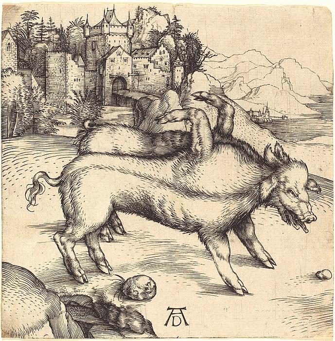 Pig-freak. Durer Engravings