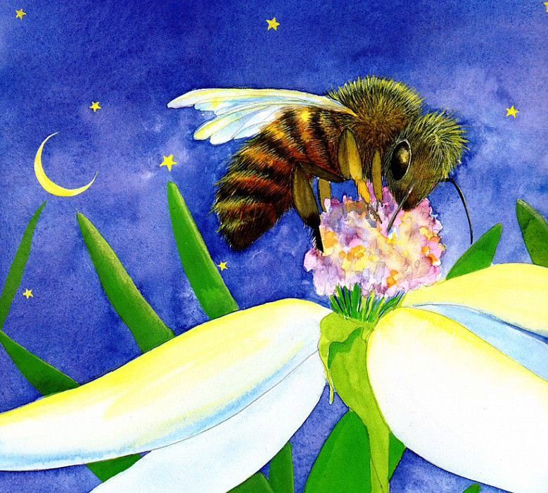 Time For Bed Little Bee. Jane Dyer