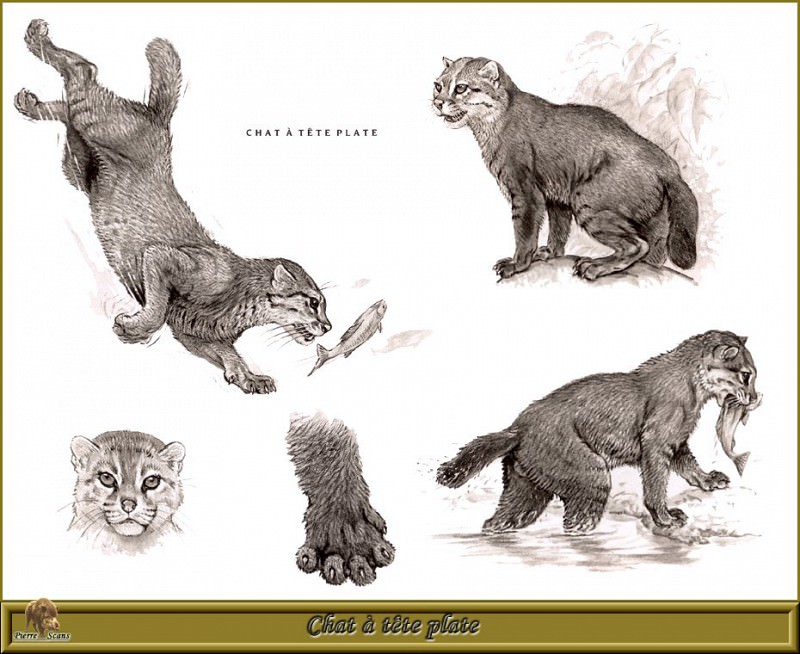 Chat а tкte plate. Robert Dallet