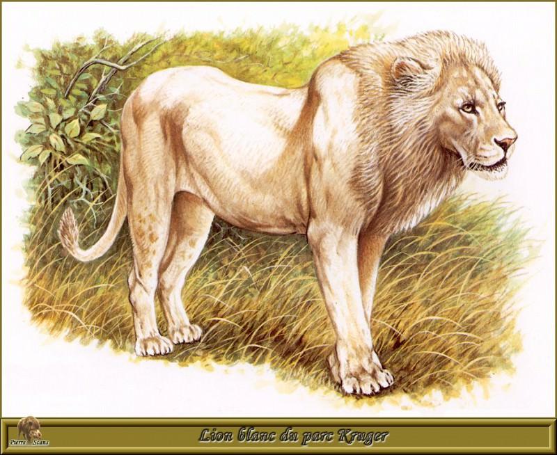 Белый лев из парка Крюгера. Роберт Даллет