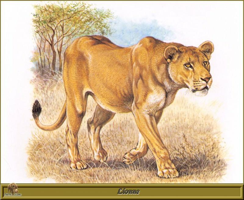 Lionne. Robert Dallet