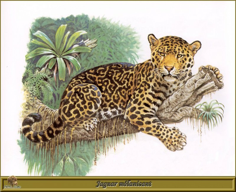 Ягуар с темной шкурой. Роберт Даллет