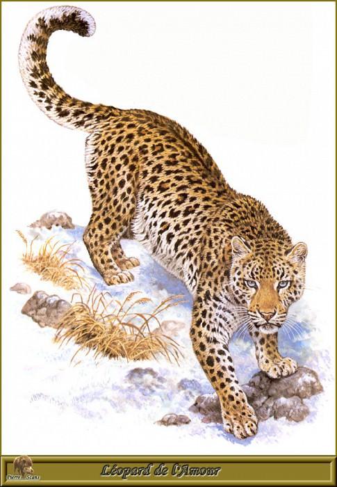 Леопард Ламура. Роберт Даллет