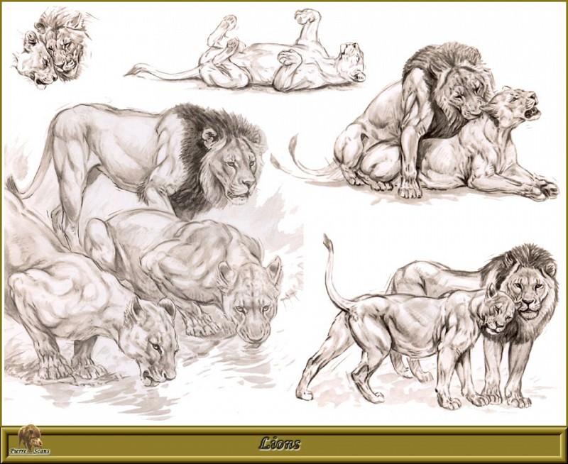 Львы. Роберт Даллет