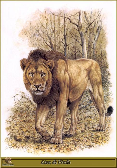 Lion de lInde. Robert Dallet