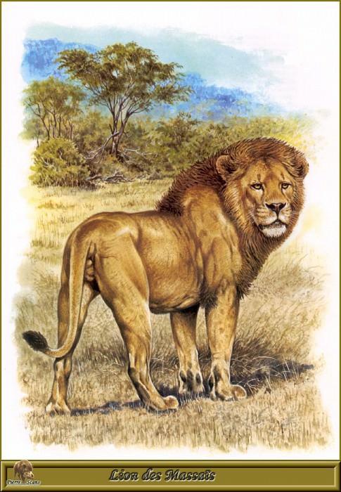Lion des Massaпs. Robert Dallet