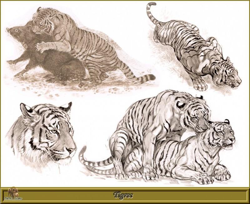 Тигры. Роберт Даллет